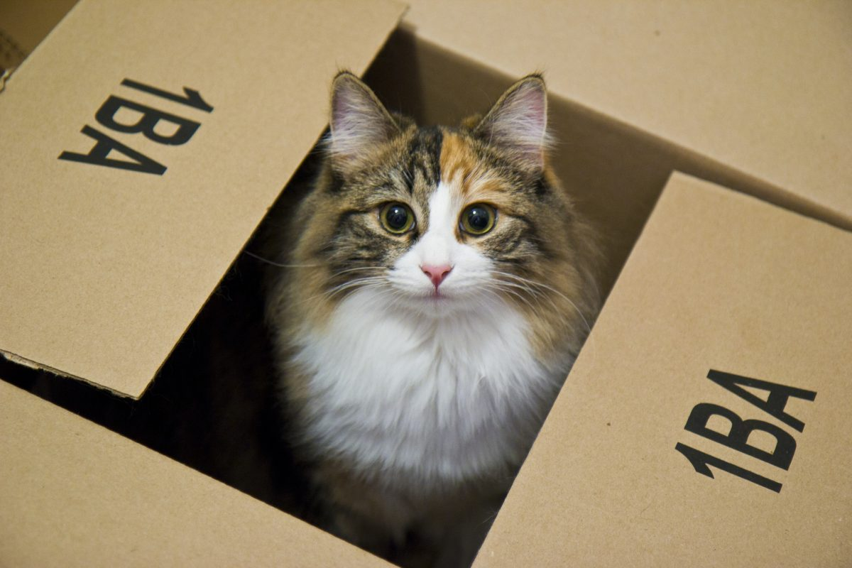 Tips for Moving House with a Cat